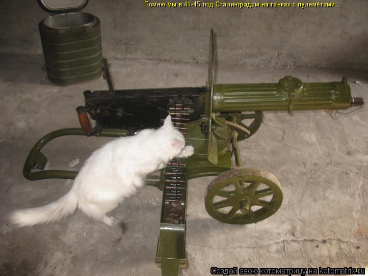 Котоматрица: Помню мы,в 41-45,под Сталинградом на танках с пулемётами...