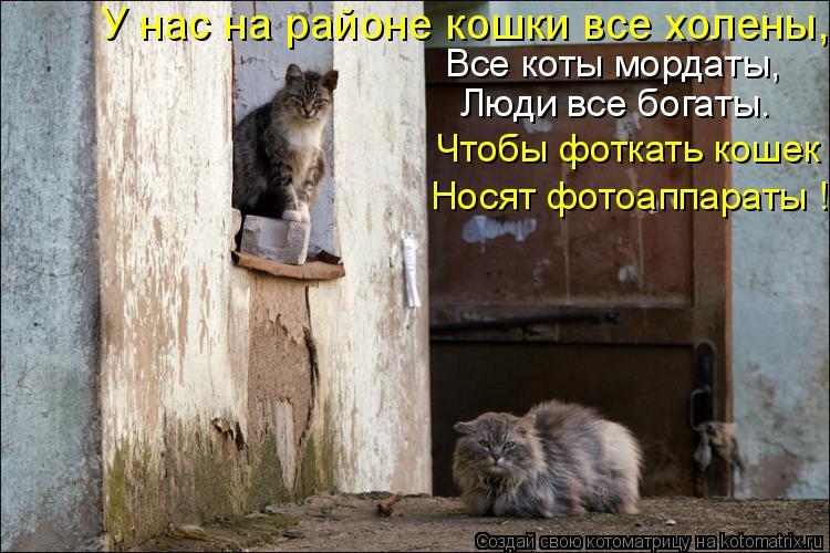 Котоматрица: Все коты мордаты, Люди все богаты. Чтобы фоткать кошек Носят фотоаппараты ! У нас на районе кошки все холены,