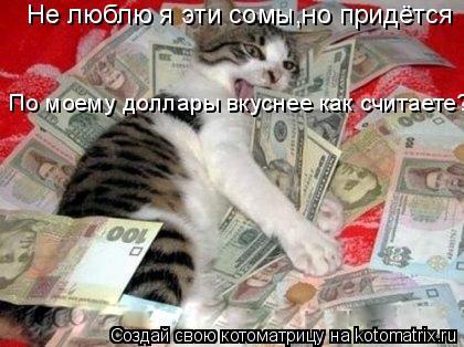 Котоматрица: Не люблю я эти сомы,но придётся По моему доллары вкуснее как считаете?