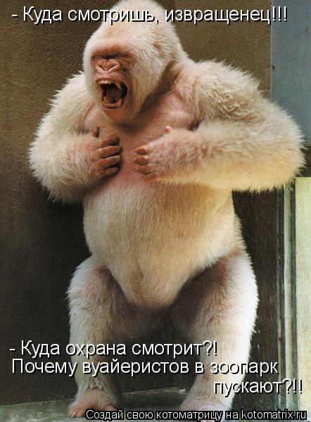 Котоматрица: - Куда смотришь, извращенец!!! - Куда охрана смотрит?! Почему вуайеристов в зоопарк пускают?!!