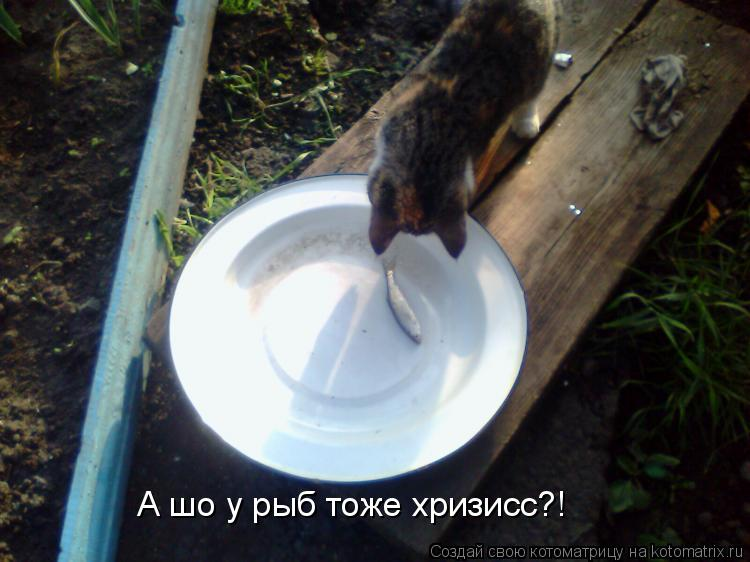 Котоматрица: А шо у рыб тоже хризисс?!