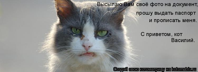 Котоматрица: Высылаю Вам своё фото на документ,   прошу выдать паспорт   и прописать меня. С приветом, кот Василий.