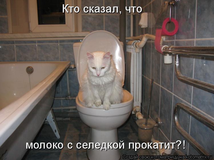 Котоматрица: Кто сказал, что молоко с селедкой прокатит?!