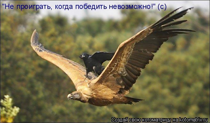 """Котоматрица: """"Не проиграть, когда победить невозможно!"""" (с)"""