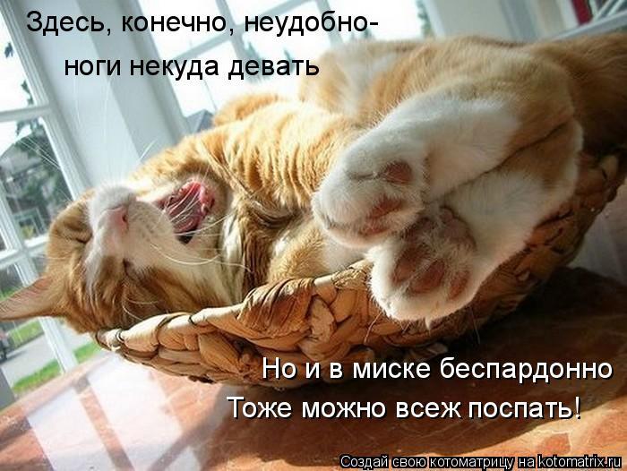 Котоматрица: Здесь, конечно, неудобно- ноги некуда девать Но и в миске беспардонно Тоже можно всеж поспать!