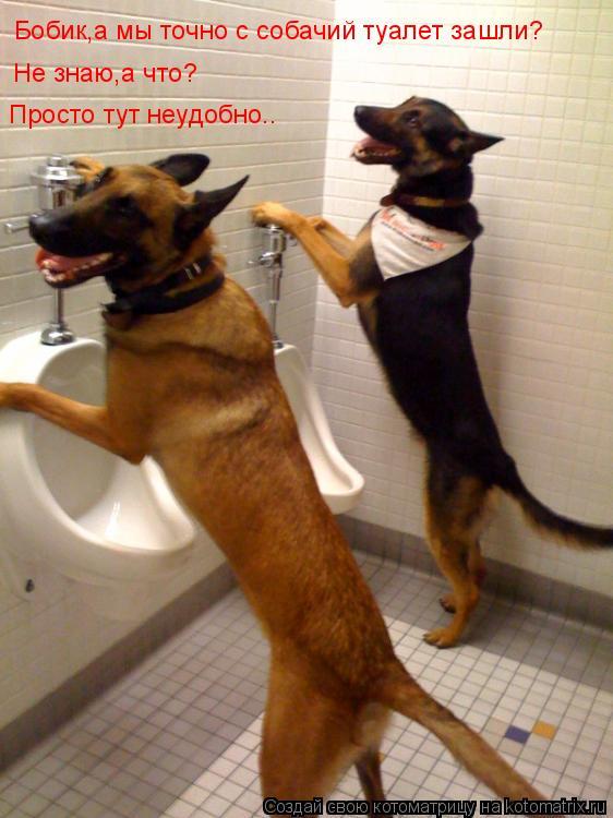 Котоматрица: Бобик,а мы точно с собачий туалет зашли? Не знаю,а что? Просто тут неудобно..