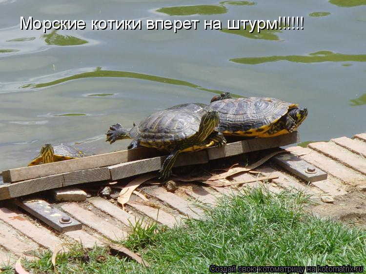 Котоматрица: Морские котики вперет на штурм!!!!!!