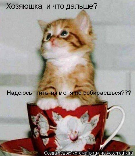 Котоматрица: Хозяюшка, и что дальше? Надеюсь, пить ты меня не собираешься???