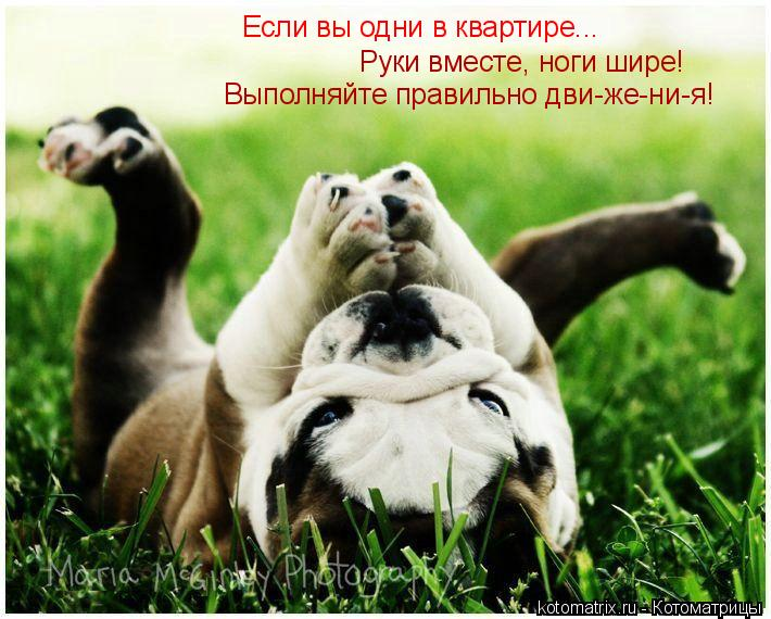 Котоматрица: Если вы одни в квартире... Если вы одни в квартире.. Руки вместе, ноги шире! Выполняйте правильно дви-же-ни-я!