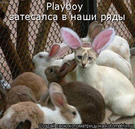 Котоматрица: Playboy затесалса в наши ряды
