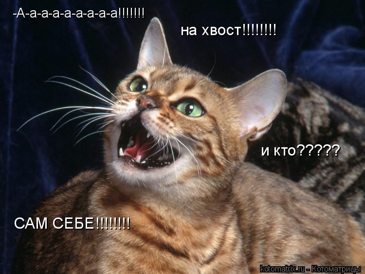 Котоматрица: -А-а-а-а-а-а-а-а-а!!!!!!! на хвост!!!!!!!! и кто????? САМ СЕБЕ!!!!!!!!