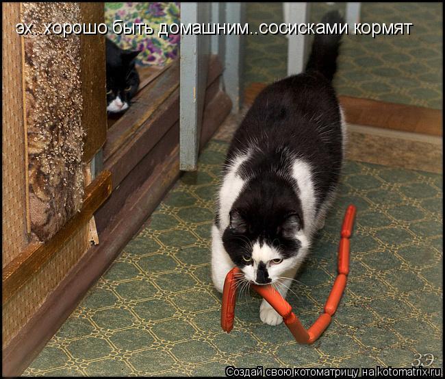 Котоматрица: эх..хорошо быть домашним..сосисками кормят