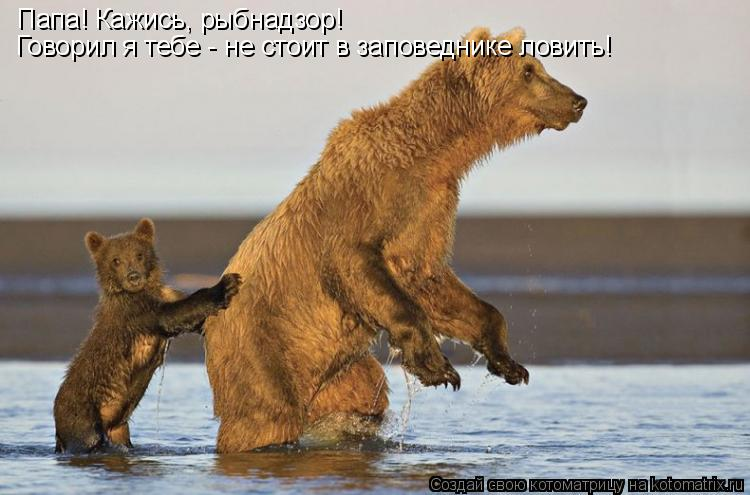 Котоматрица: Папа! Кажись, рыбнадзор! Говорил я тебе - не стоит в заповеднике ловить!