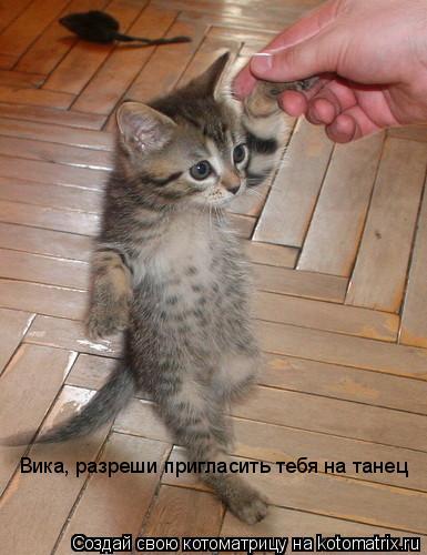 Котоматрица: Вика, разреши пригласить тебя на танец