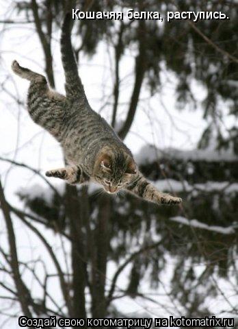 Котоматрица: Кошачяя белка, раступись.