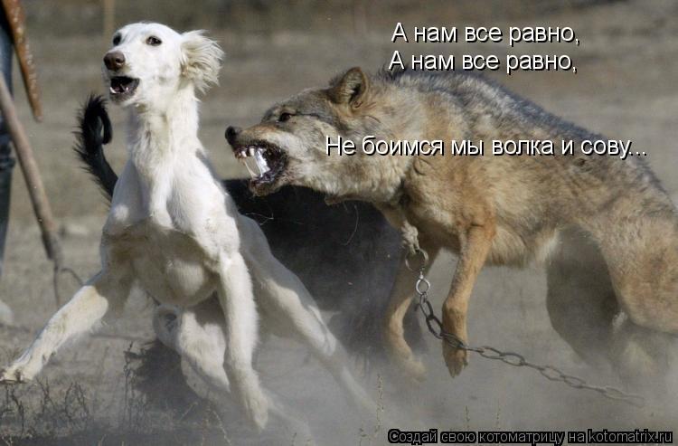 Котоматрица: А нам все равно, А нам все равно, Не боимся мы волка и сову...