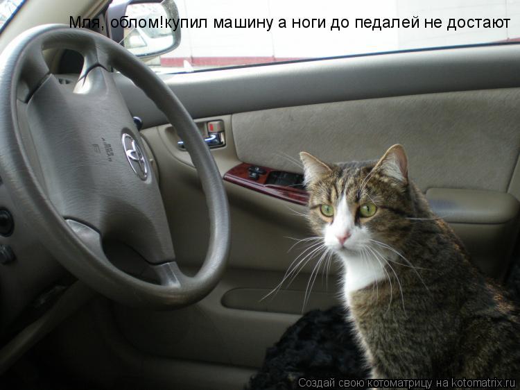 Котоматрица: Мля, облом!купил машину а ноги до педалей не достают