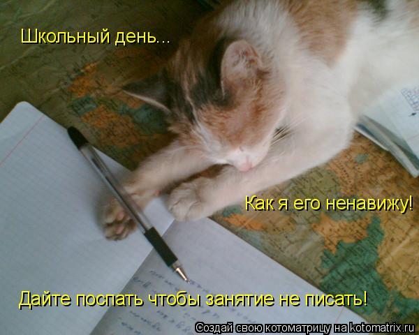 Котоматрица: Школьный день... Как я его ненавижу! Дайте поспать чтобы занятие не писать!