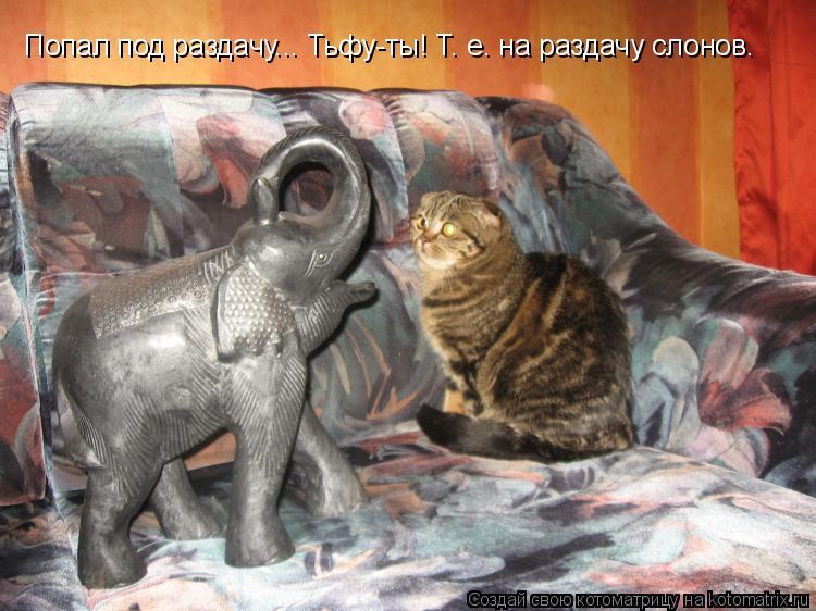 Котоматрица: Попал под раздачу... Тьфу-ты! Т. е. на раздачу слонов.