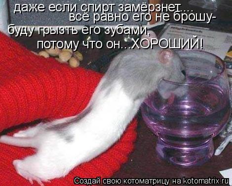 Котоматрица: даже если спирт замёрзнет.... всё равно его не брошу- буду грызть его зубами, потому что он...ХОРОШИЙ!