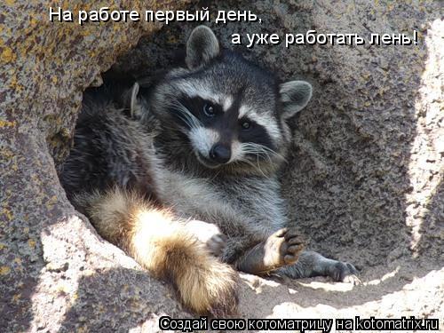 Котоматрица: На работе первый день,  а уже работать лень!