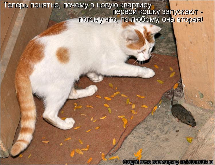 Котоматрица: Теперь понятно, почему в новую квартиру первой кошку запускают -  потому что, по любому, она вторая!