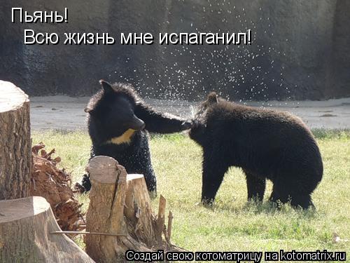 Котоматрица: Пьянь! Всю жизнь мне испаганил!