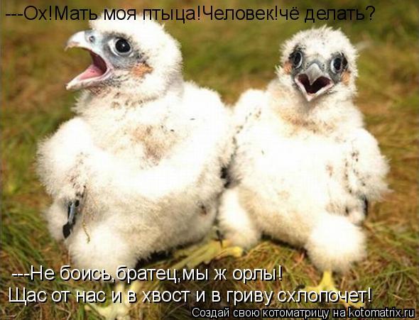 Котоматрица: ---Ох!Мать моя птыца!Человек!чё делать? ---Не боись,братец,мы ж орлы! Щас от нас и в хвост и в гриву схлопочет!
