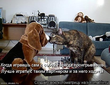 Котоматрица: Когда играешь сам с собой - всегда проигрываешь... Лучше играть с таким партнером и за него ходить!