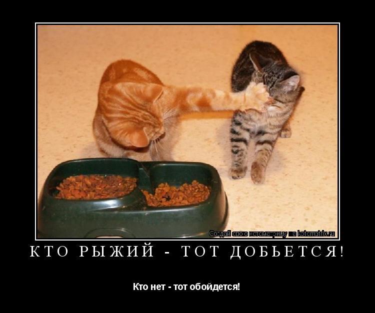 Котоматрица: Кто Рыжий - тот добьется!  Кто нет - тот обойдется!