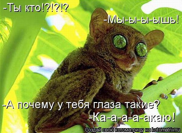Котоматрица: -Ты кто!?!?!? -Мы-ы-ы-ышь! -А почему у тебя глаза такие? -Ка-а-а-а-акаю -Ка-а-а-а-акаю!