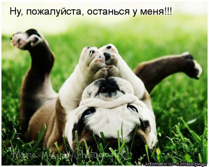 Котоматрица: Ну, пожалуйста, останься у меня!!!