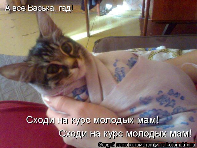 Котоматрица: А все Васька, гад! Сходи на курс молодых мам! Сходи на курс молодых мам!