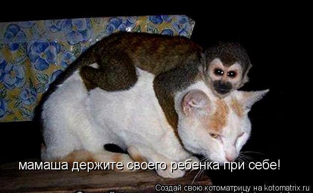 Котоматрица: мамаша держите своего ребенка при себе!