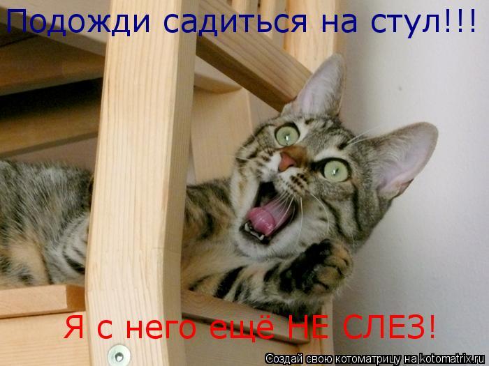 Котоматрица: Подожди садиться на стул!!! Я с него ещё НЕ СЛЕЗ!