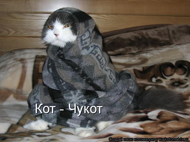 Котоматрица: Кот - Чукот