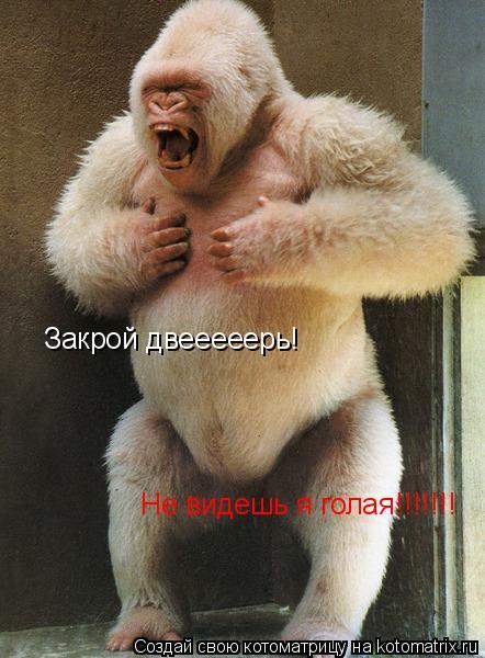 Котоматрица: Закрой двееееерь! Не видешь я голая!!!!!!!