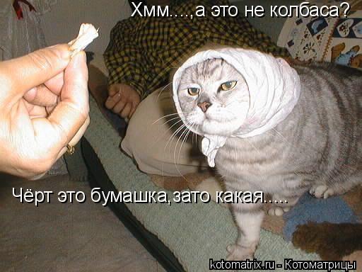 Котоматрица: Хмм....,а это не колбаса? Чёрт это бумашка,зато какая.....