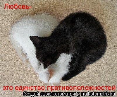 Котоматрица: Любовь- это единство противоположностей