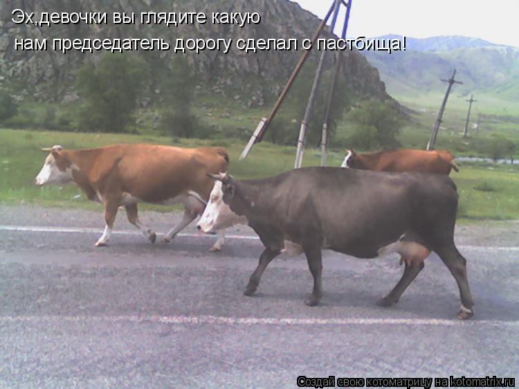 Котоматрица: Эх,девочки вы глядите какую нам председатель дорогу сделал с пастбища!