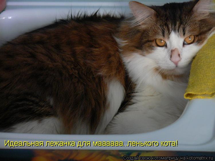 Котоматрица: Идеальная лежанка для маааааа..ленького кота!