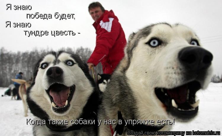 Котоматрица: Я знаю  победа будет, Я знаю  тундре цвесть -  Когда такие собаки у нас в упряжке есть!