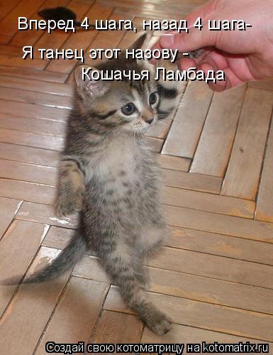 Котоматрица: Вперед 4 шага, назад 4 шага- Я танец этот назову - Кошачья Ламбада