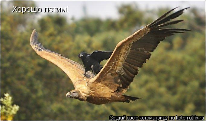 Котоматрица: Хорошо летим!