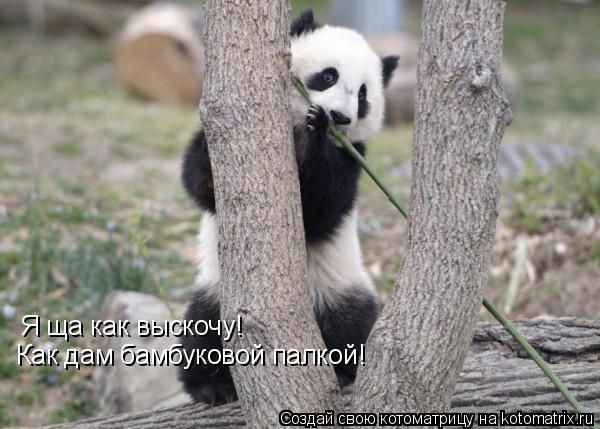 Котоматрица: Я ща как выскочу! Как дам бамбуковой палкой!