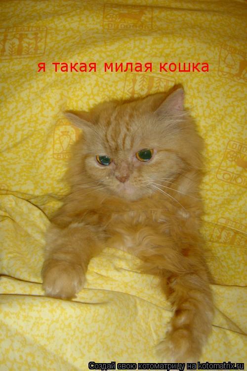 Котоматрица: я такая милая кошка