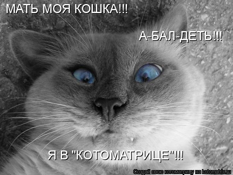 """Котоматрица: МАТЬ МОЯ КОШКА!!! Я В """"КОТОМАТРИЦЕ""""!!! А-БАЛ-ДЕТЬ!!!"""