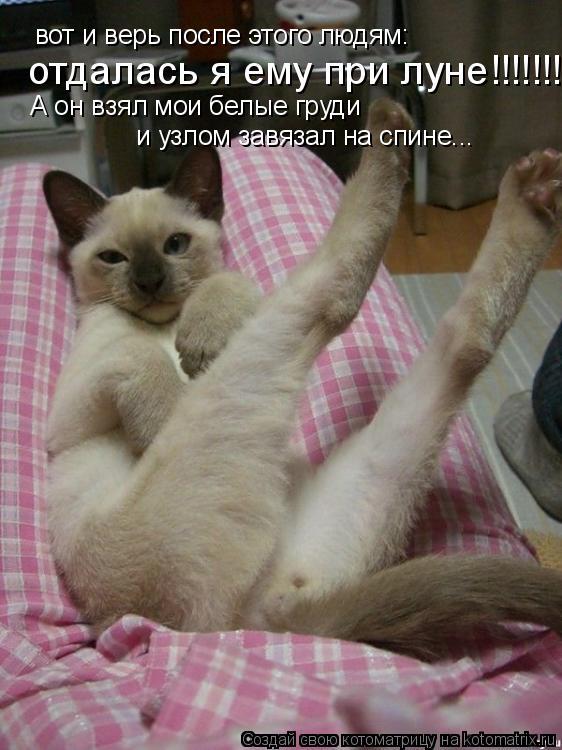 Котоматрица: вот и верь после этого людям: отдалась я ему при луне!!!!!!! А он взял мои белые груди  и узлом завязал на спине...