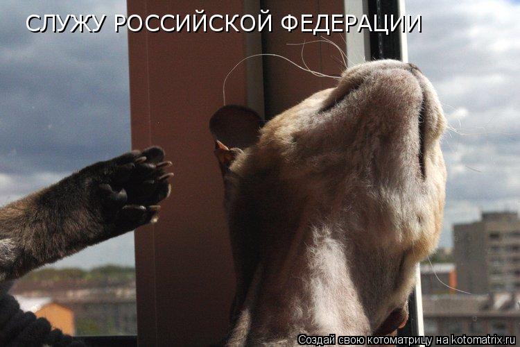 Котоматрица: СЛУЖУ РОССИЙСКОЙ ФЕДЕРАЦИИ