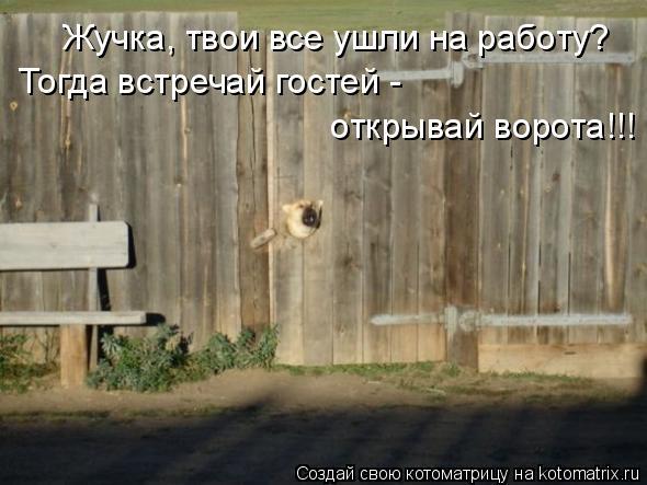 Котоматрица: Жучка, твои все ушли на работу? Тогда встречай гостей -   открывай ворота!!!